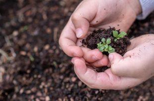 CSR-Kommunikation: Kein Grund für laute Töne? - seedlings 3448883 1920